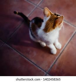 Small cat sitting at street.