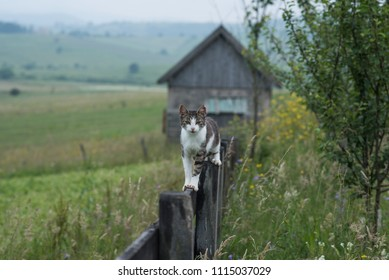 small cat standing on tin wooden fence