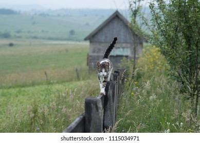 small cat walking over the tin wooden fence on farm