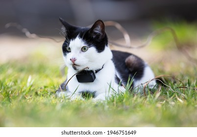 Small cat wearing gps tracker outdoors, selective focus on eyes