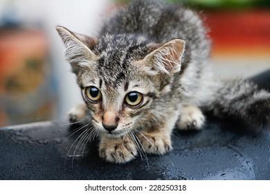 Small cat-Kitten