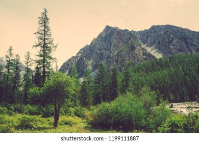 Small cedar against mountain creek in valley against giant rock. Water stream in brook from mountains. Rich vegetation and forest of highlands. Conifer trees. Atmospheric landscape of majestic nature.