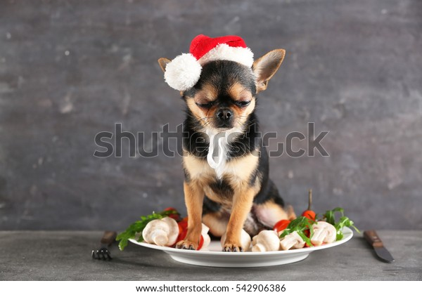 Small chihuahua dog in Santa hat on plate with food