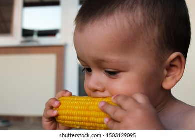 Small child eating buttered corn on the cob. Toddler biting shiny boiled maize with kernels. Harvesting object. Summer background for harvest festival banner, restaurant, cafe. Food industry
