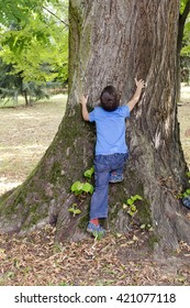 Small child hugging and trying to climb a big tree in a park