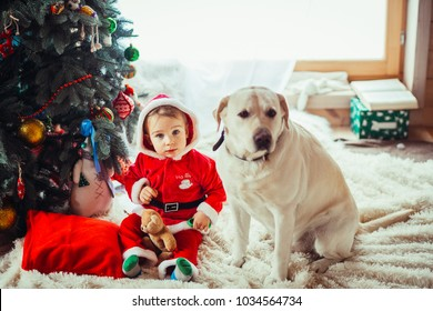 The small child and labrador dog sitting near Christmas Tree