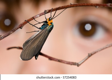 A small child looking at a moth resting on a branch