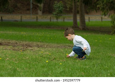 Small child picks flowers engaging in nature play while outside exploring in a grassy park. Candid and unposed, the toddler wears a white top and blue jeans looking at dandelions.