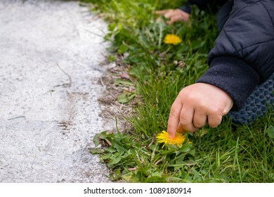 A small child touching a yellow dandelion flower while sitting on the grass next to a concrete pathway