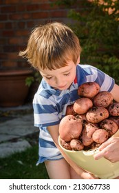 A small child tries to carry a large tub of freshly picked potatoes