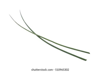 small Chives bunch isolated on white background
