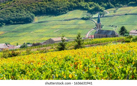 The small church between vineyards   in Burgundy, France