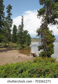 A small clearing by the Granby Lake in Colorado.  There is a dead tree stump and evergreen trees.  The sky overhead is bright blue with white puffy clouds.