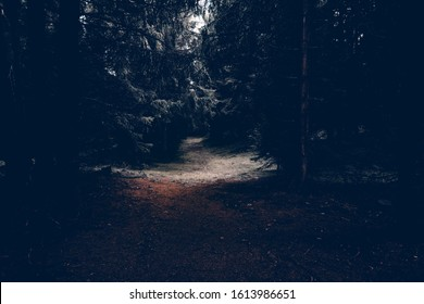 A small clearing in the dark forest