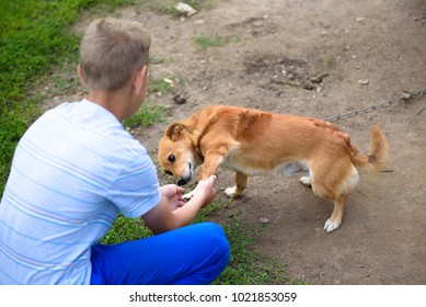A small and clever red dog gives the paw to the boy.