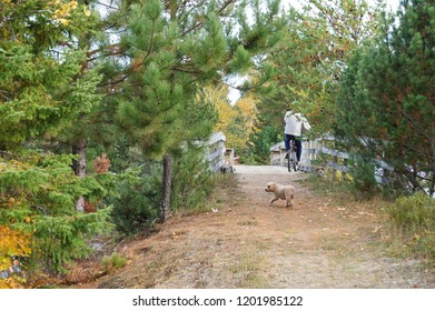 Small cockapoo dog wanders an Algonquin Trail behind its owner during a bicycle ride in the autumn