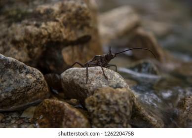 small coleoptera Calabria