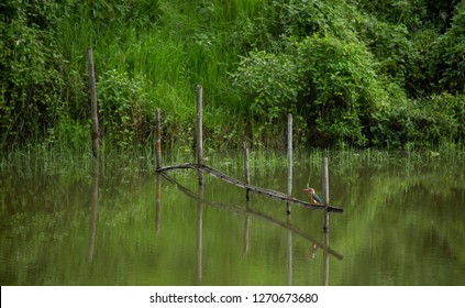 A small colorful bird is waiting to find some things to eat. It is active in the cold  morning above the pond. The bamboos are so beautiful to produce visual guideline in the image.