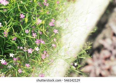 small colorful flower background
