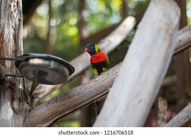 Small colorful parrot in an aviary.