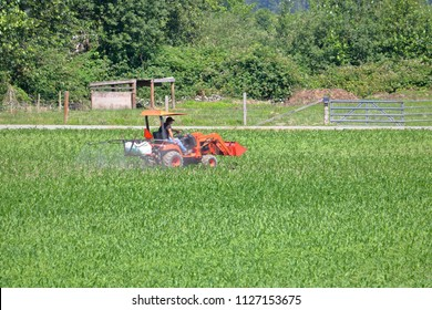 A small corn field employs a small tractor that is used to spray the crop with pesticides to eliminate the threat of insects.