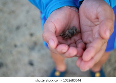 small crab in human hand