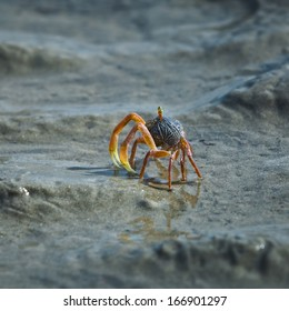 Small crab on marine sand .