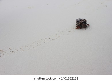 Small crab running on the sand on Caribeans
