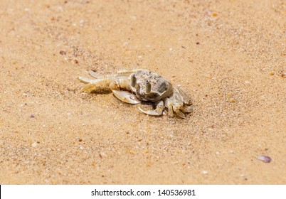 Small crab walking on beach sand