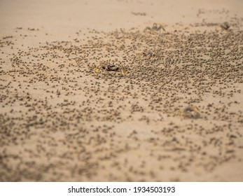 Small crabs live on the beach