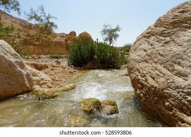 Small creek in the desert (Wadi Ibn Hammad in Jordan)