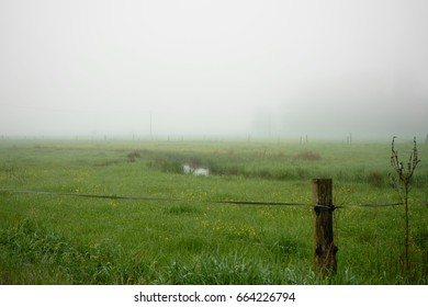 Small creek in a green field on a foggy morning