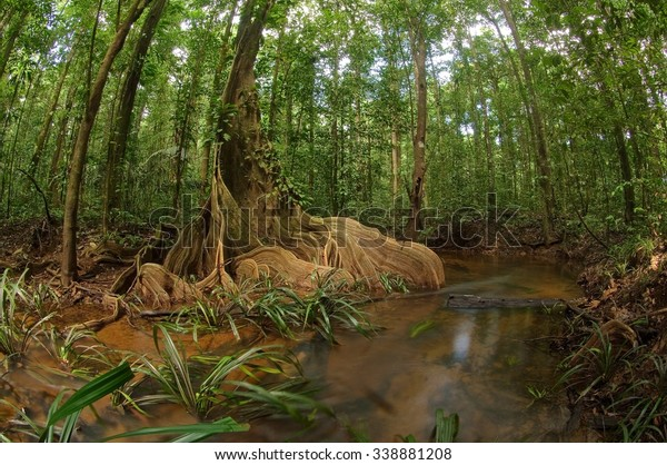 A small creek in the rainforest in Grench Guiana.