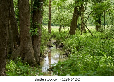 Small creek streaming through a forest