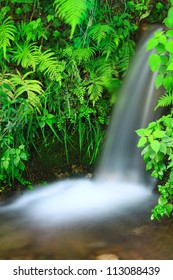 Small creek waterfall with green ferns and delicate rain forest vegetation. Slow motion water effect.