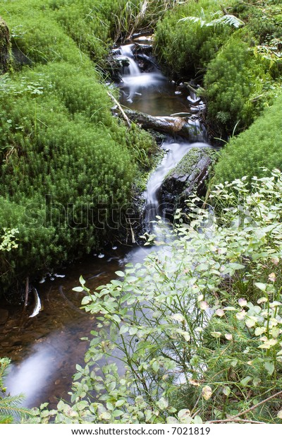 a small creek at the wood