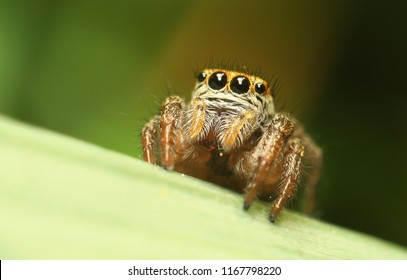 small curious jumping spider in the garden