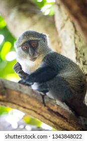 Small curious monkey on green tree in forest