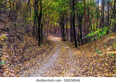 Small curved road in autumn forest under hill, Bratislava, Slovakia