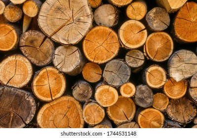 Small cut logs being seasoned in a log pile.