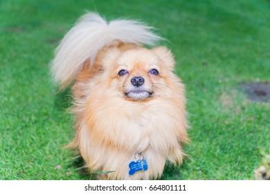 Small cute dog in the garden
