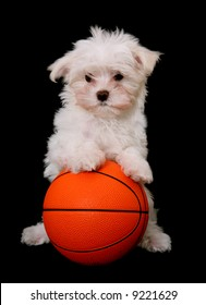 A small cute dog playing basketball over a black background