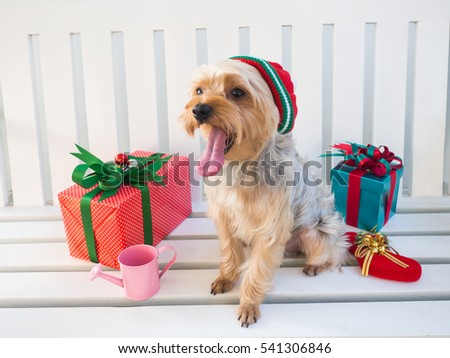 Small Cute Funny Yorkshire Terrier Puppy Stock Photo Edit Now