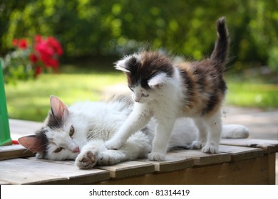 Small cute kitten and his mother