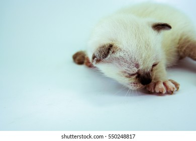 Small cute kitten isolated on white background.Image with soft focus.