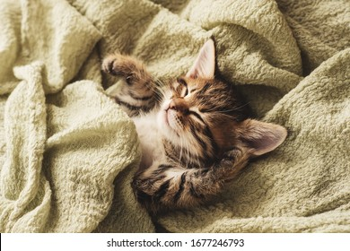 a small cute kitten is sleeping on a green blanket