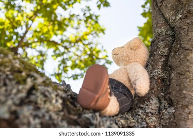 Small cute teddy bear sitting at branch of big tree, enjoy summery day and rustle of leaves