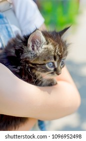 small dark fluffy kitten in child hands closeup in sunny summer day