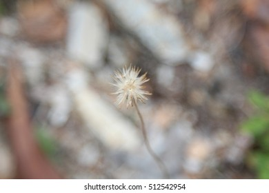 A small dead flower full with pollen at a park - selected focus - depth of field
