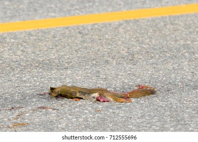 A small dead squirrel lying in the road. Blood is visible and his innards are hanging out. Yellow center line on road is visible. Room for text.